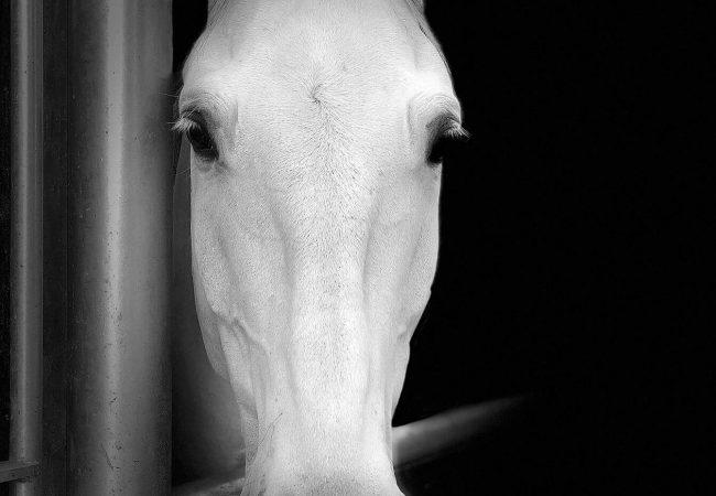 Spanish_Riding_School_Zumtobel_new_01_bw